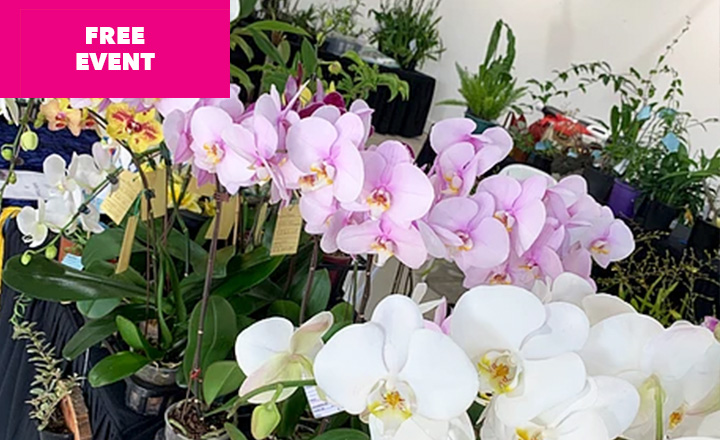 Orchid Wonderland at Carrara Markets