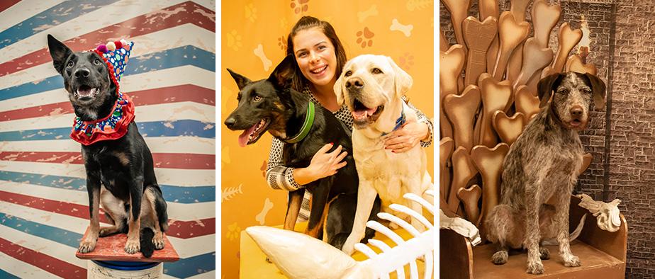 Pet Stars: The Fur Baby Insta-museum