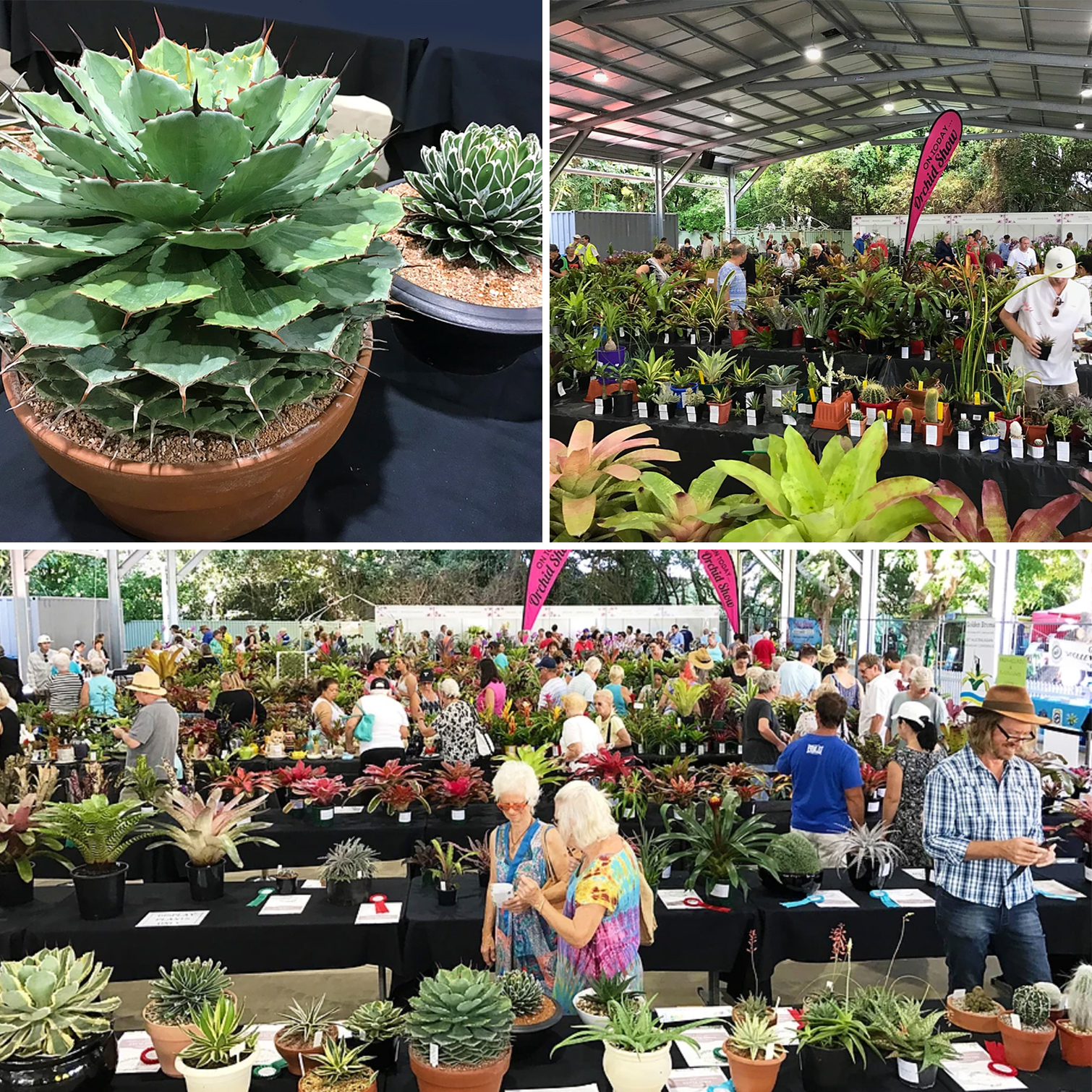 Plant Sale Spectacular at Carrara Markets