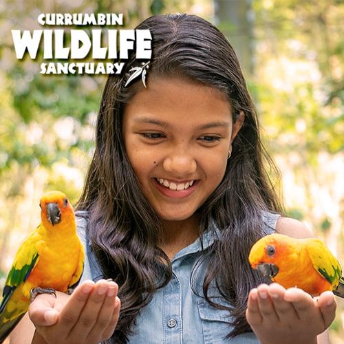 School Holiday Activities Currumbin Wildlife Sanctuary