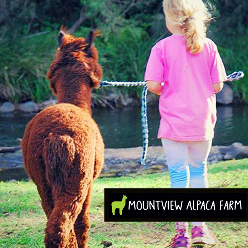 School Holidays Activities Gold Coast Mountview Alpaca Farm