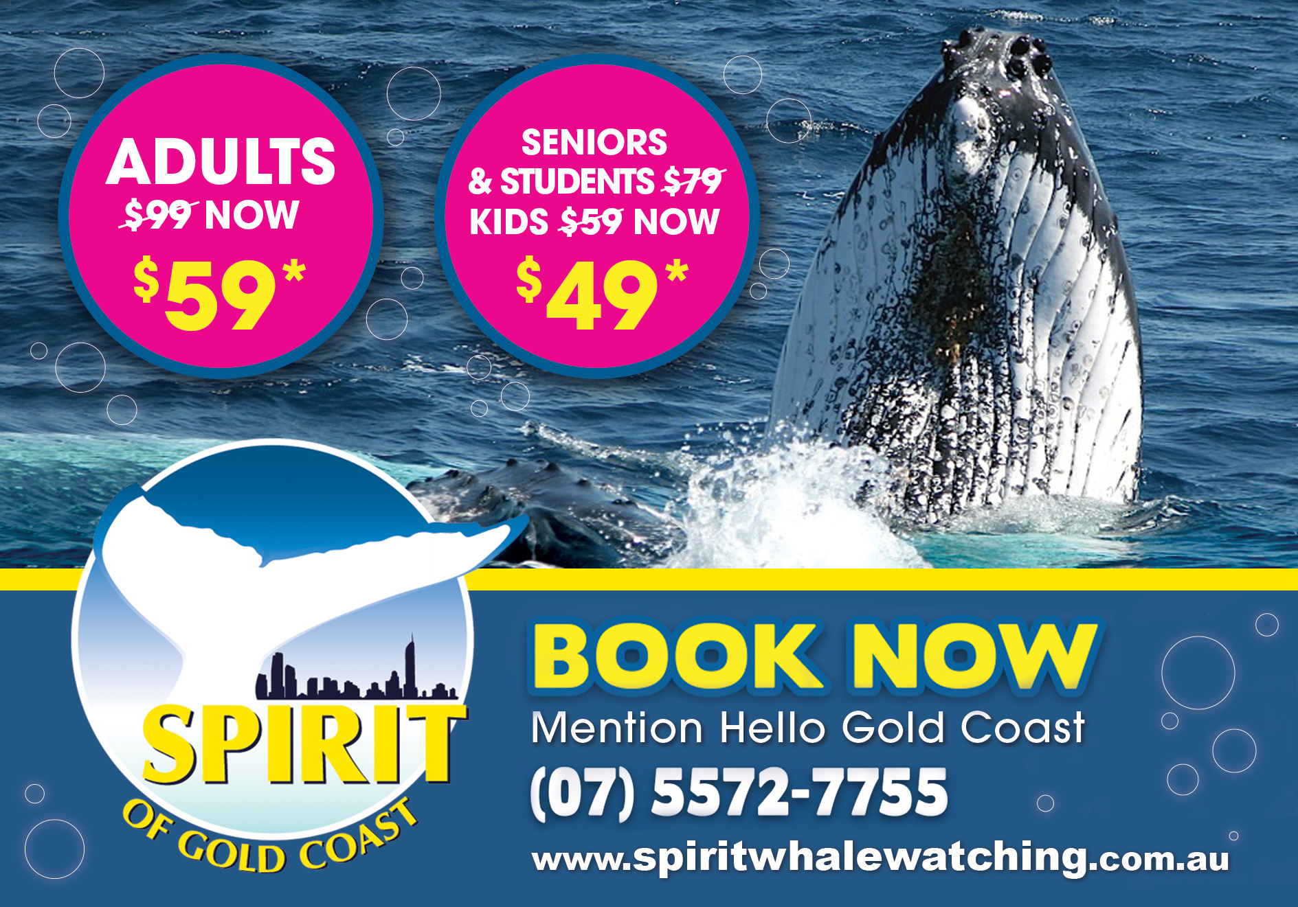 Spirit of Gold Coast Whale Watching Special Offer