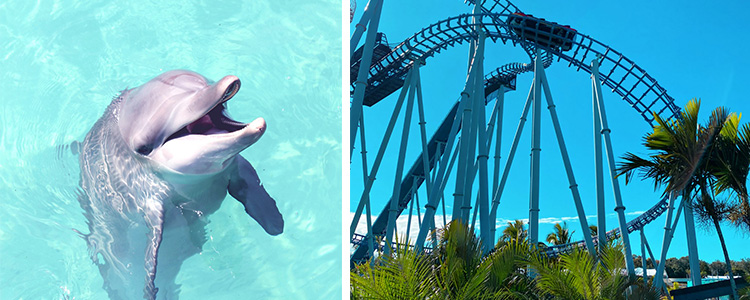Summer Activities Gold Coast