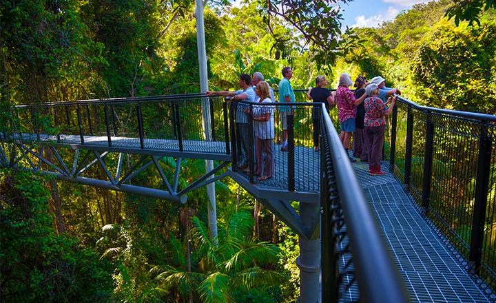 Tamborine Mountain Tamborine Rainforest Skywalk