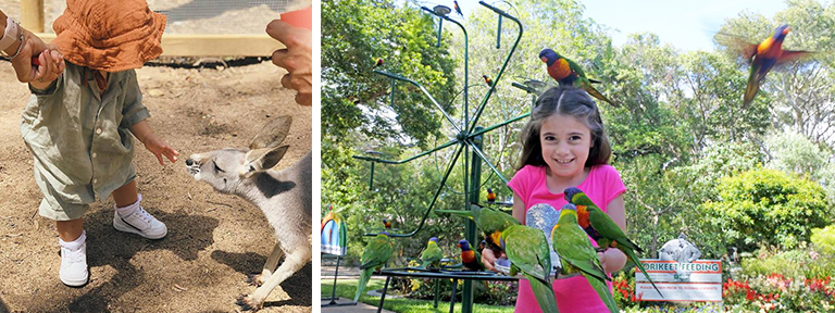 Top Gold Coast Kids Activities Currumbin Wildlife Sanctuary