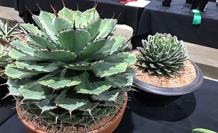 Plant Sale Spectacular