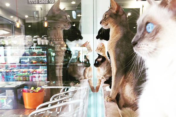 Crazy Cat Café Surfers Paradise