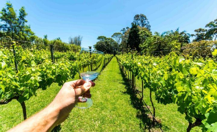 Tamborine Mountain Gold Coast Wine Tours