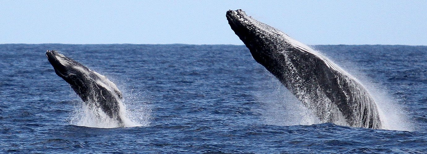 Spirit Whale Watching