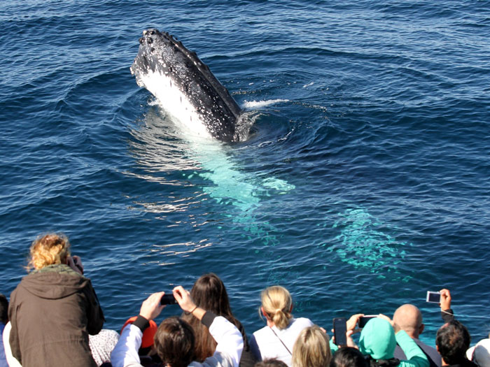Tour group watching the Humpback Whales from Spirit of Gold Coast Whale Watching
