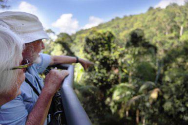 View from the Tamborine Rainforest Skywalk